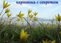 kak_sdelat_kartinku_ssylkoy