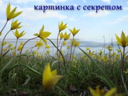 kak_sdelat_kartinku_ssylkoy_как_сделать_картинку_ссылкой