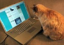 sozdat-_svoj_sajt_blogging